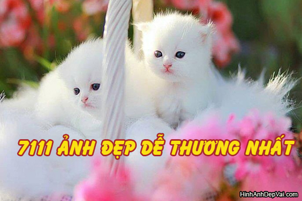Anh Dep De Thuong Nhat