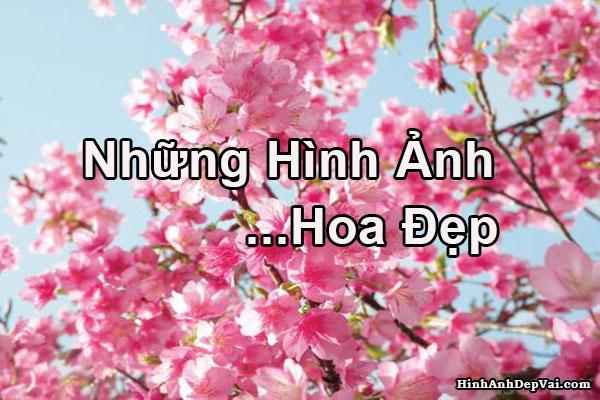 Xem Hinh Anh Hoa Dep Nhat Hoa Anh Dao